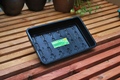 Standard Seed Tray Black