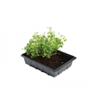 Professional Half Seed Trays (5 Pack%2