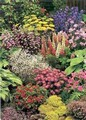 Garden Border Perennials Collection
