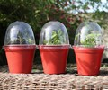 Bell Boys Mini Propagators x 3